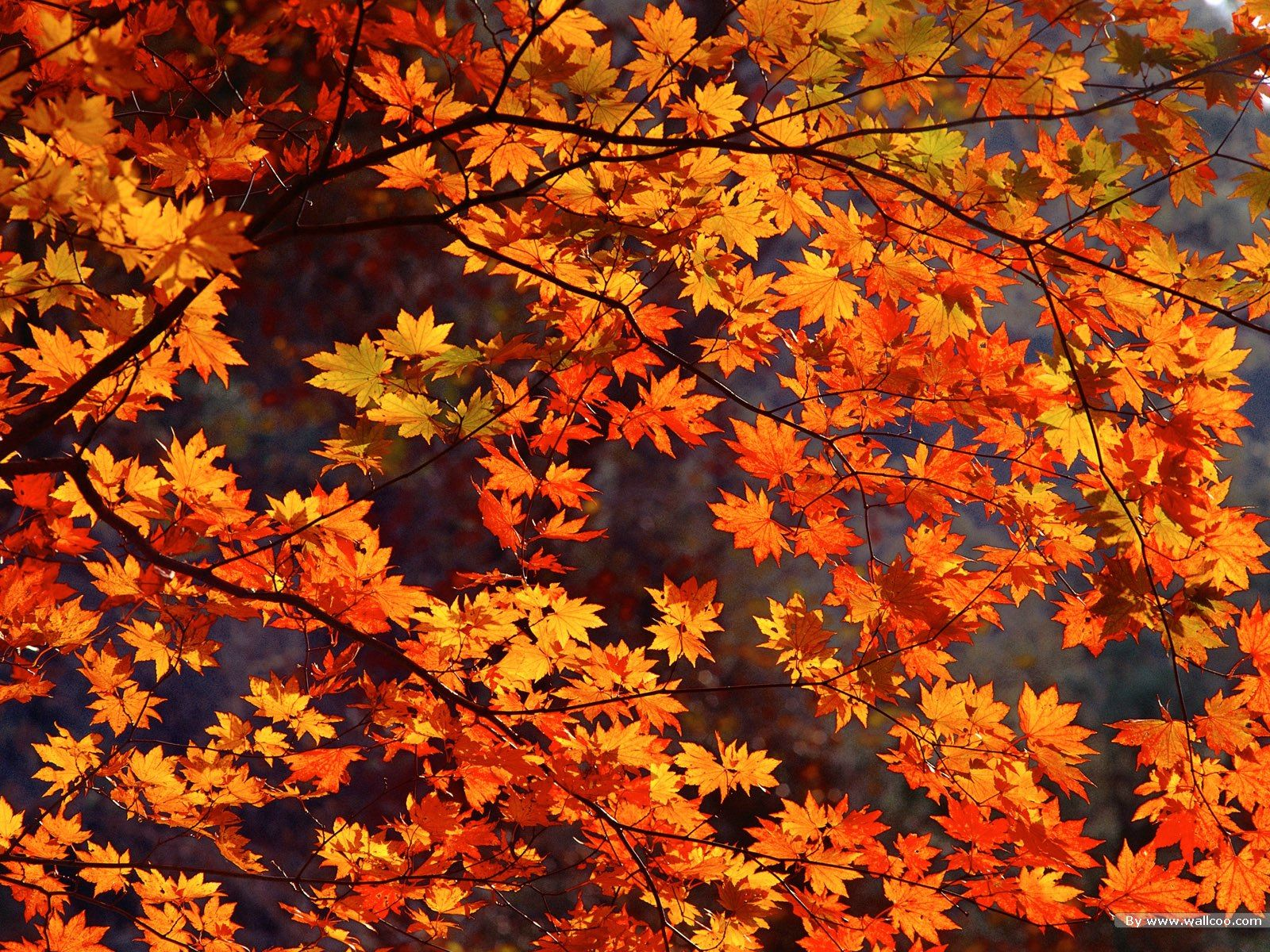 Tumblr Autumn Desktop Wallpapers Top Free Tumblr Autumn Desktop