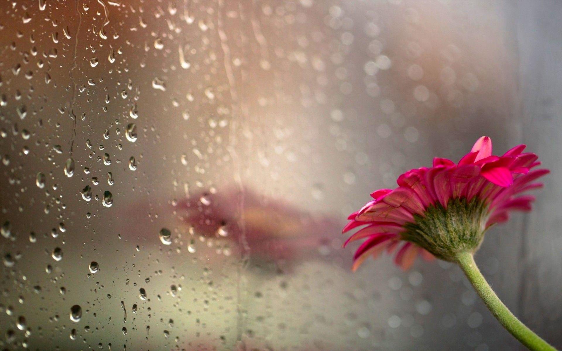 Beautiful Rain Wallpapers Top Free Beautiful Rain Backgrounds Wallpaperaccess