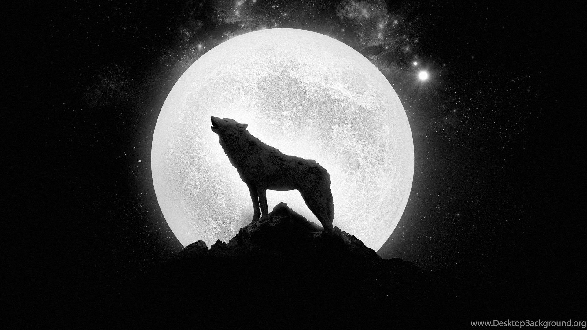 Lone Wolf HD Wallpapers