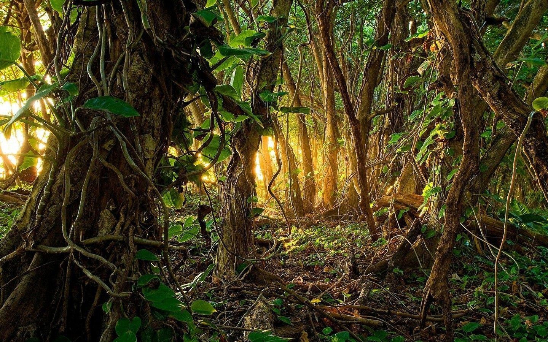 Jungle Rain Wallpapers Top Free Jungle Rain Backgrounds