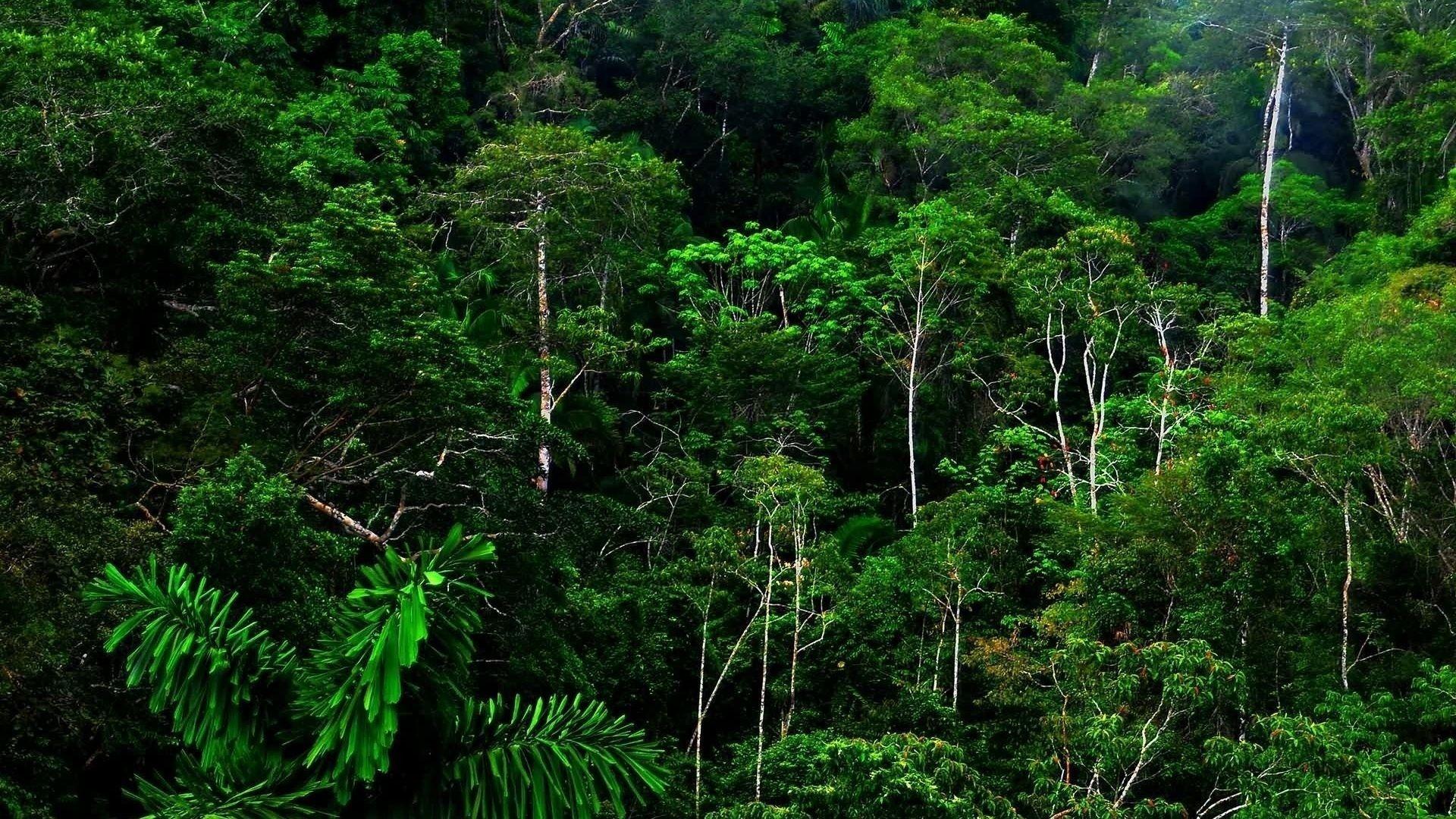 Jungle Rain Wallpapers - Top Free Jungle Rain Backgrounds ...