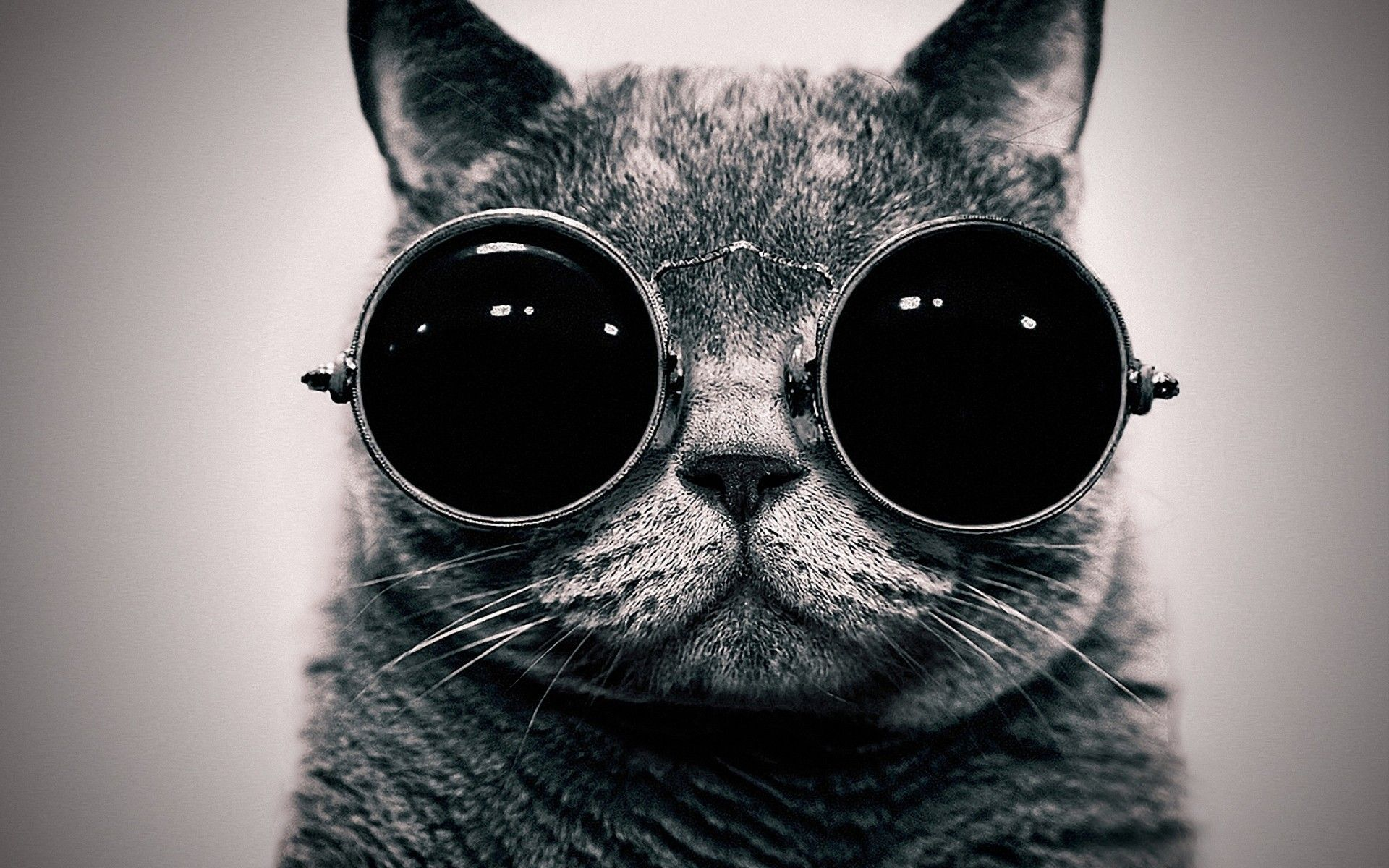 Tumblr Hipster Cat Wallpapers Top Free Tumblr Hipster Cat Backgrounds Wallpaperaccess