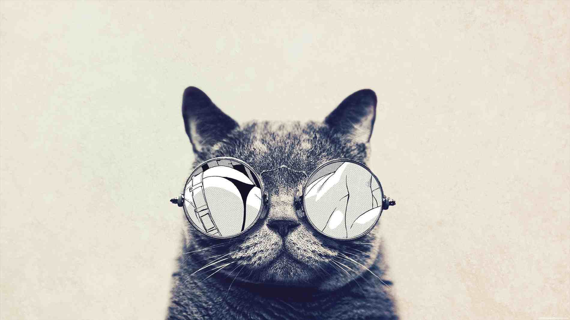 Hipster Cats Laptop Wallpapers Top Free Hipster Cats Laptop Backgrounds Wallpaperaccess