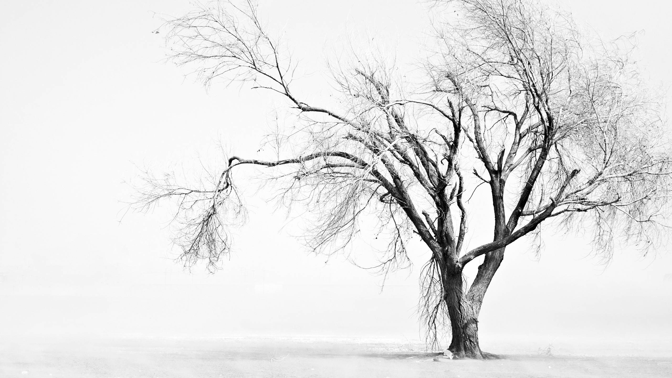 White Tree Wallpapers Top Free