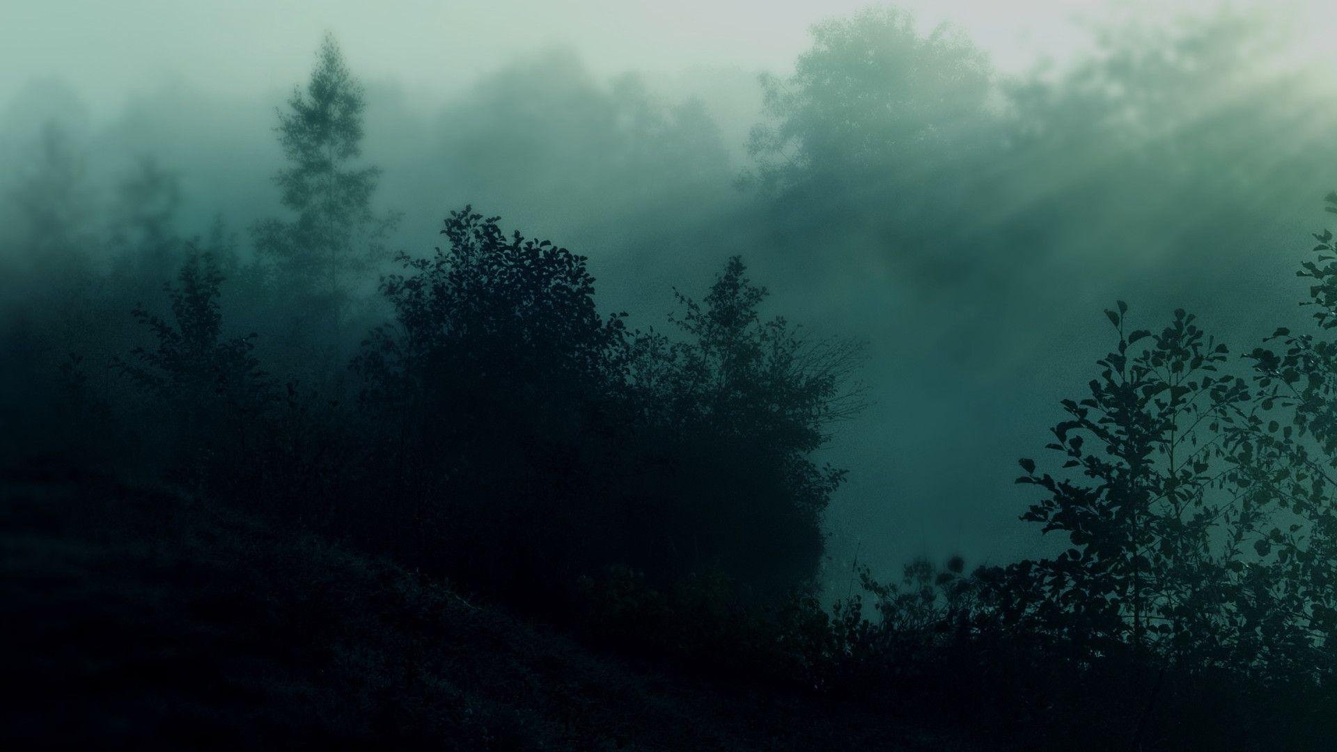 tumblr forest aesthetic wallpaper