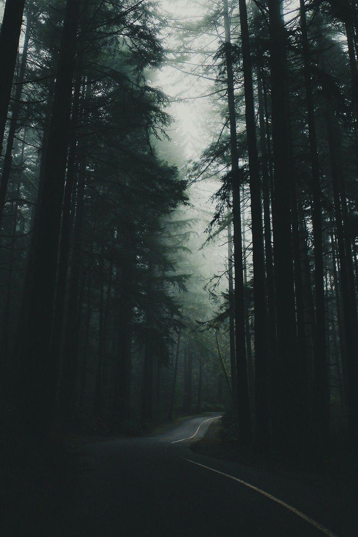 high resolution foggy forest wallpaper