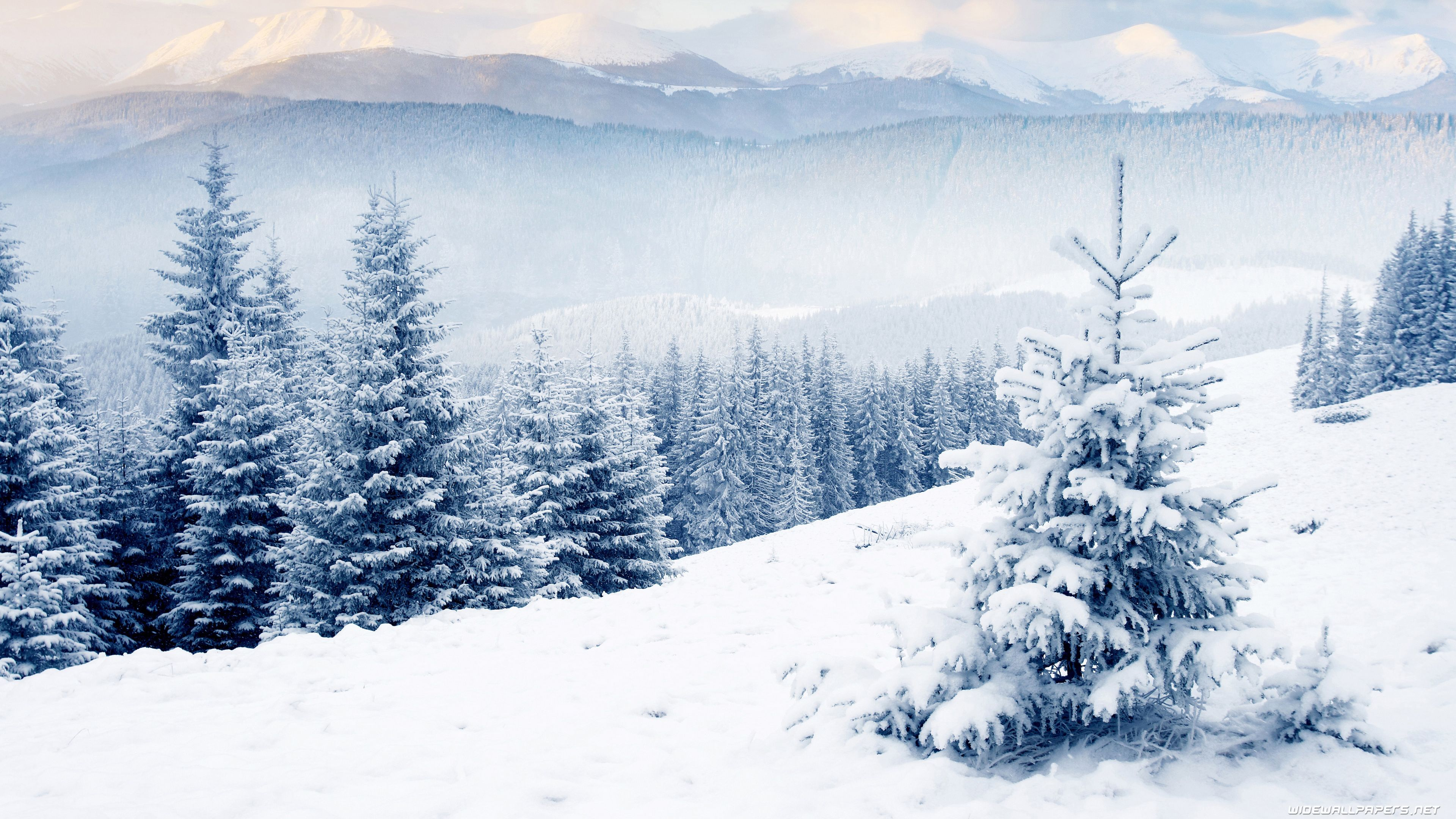 Winter Hd Desktop Wallpapers Top Free Winter Hd Desktop