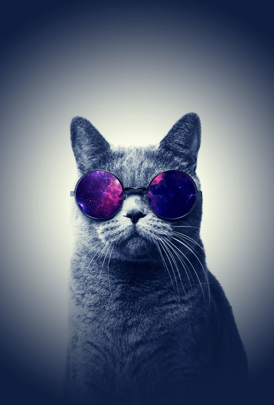 Cool Cat Iphone Wallpapers Top Free Cool Cat Iphone Backgrounds Wallpaperaccess