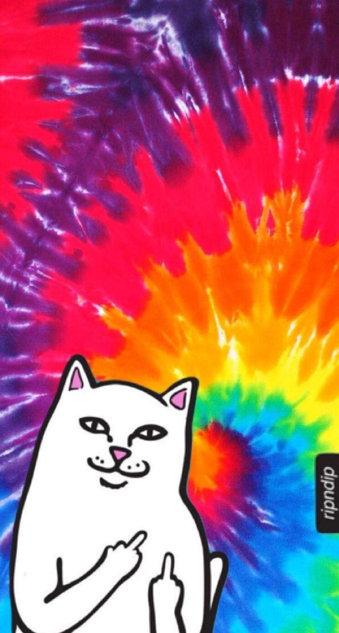 51 Best Free Purple Cat Aesthetic Wallpapers Wallpaperaccess