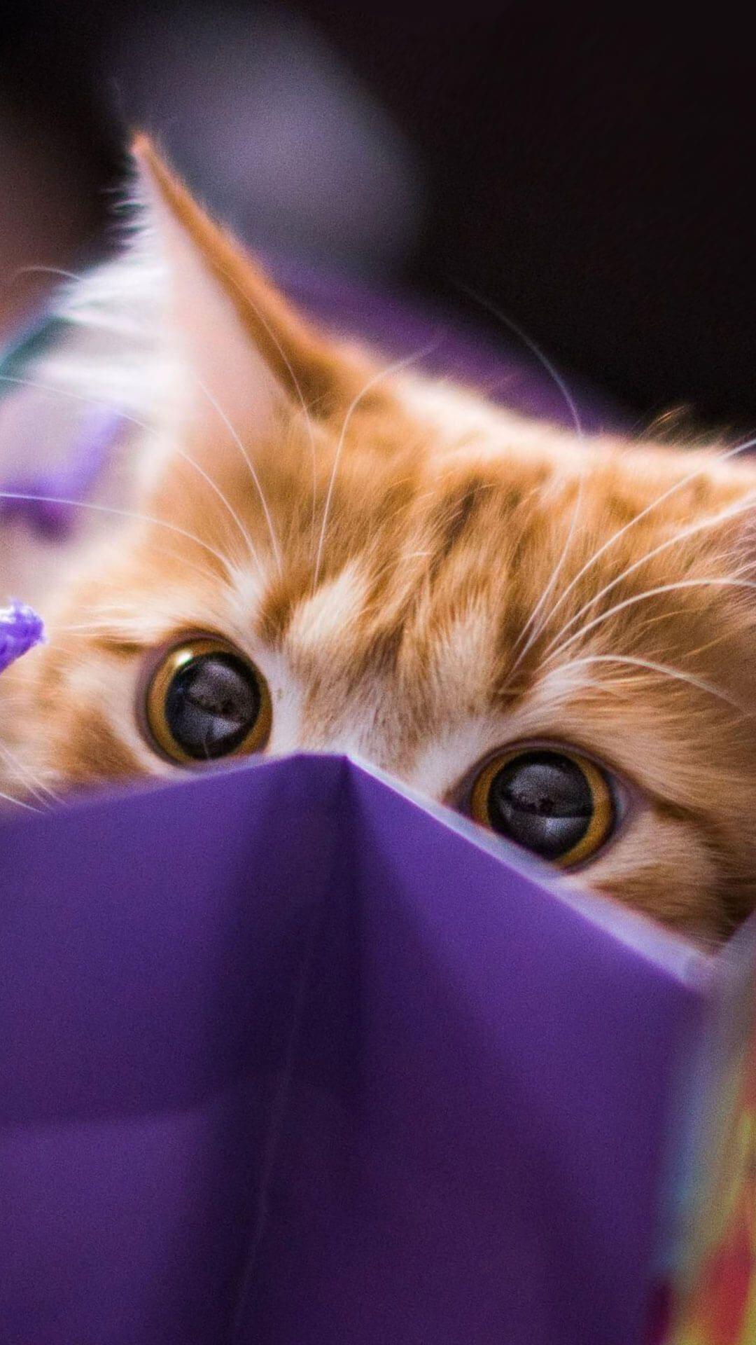 purple cat aesthetic wallpapers