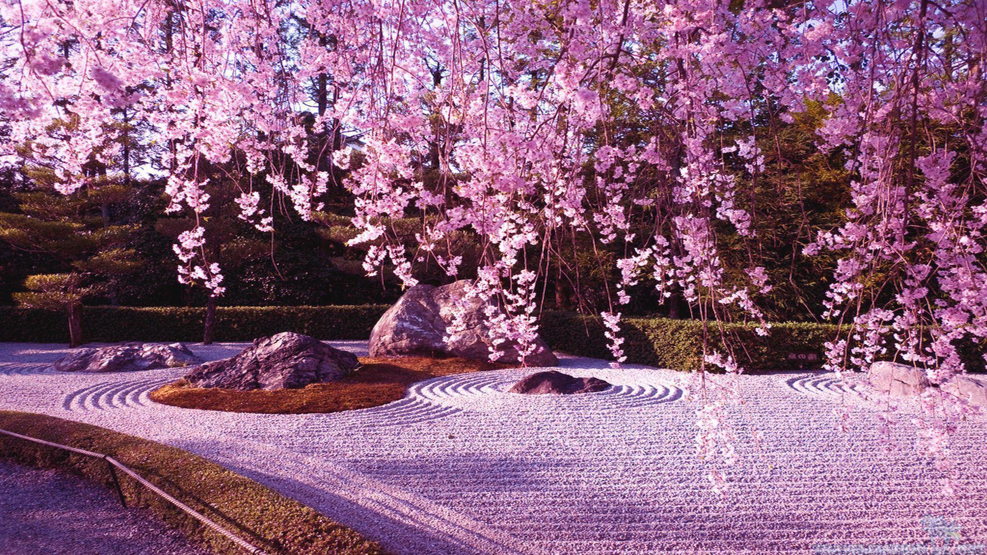Japanese Sakura Wallpapers Top Free Japanese Sakura