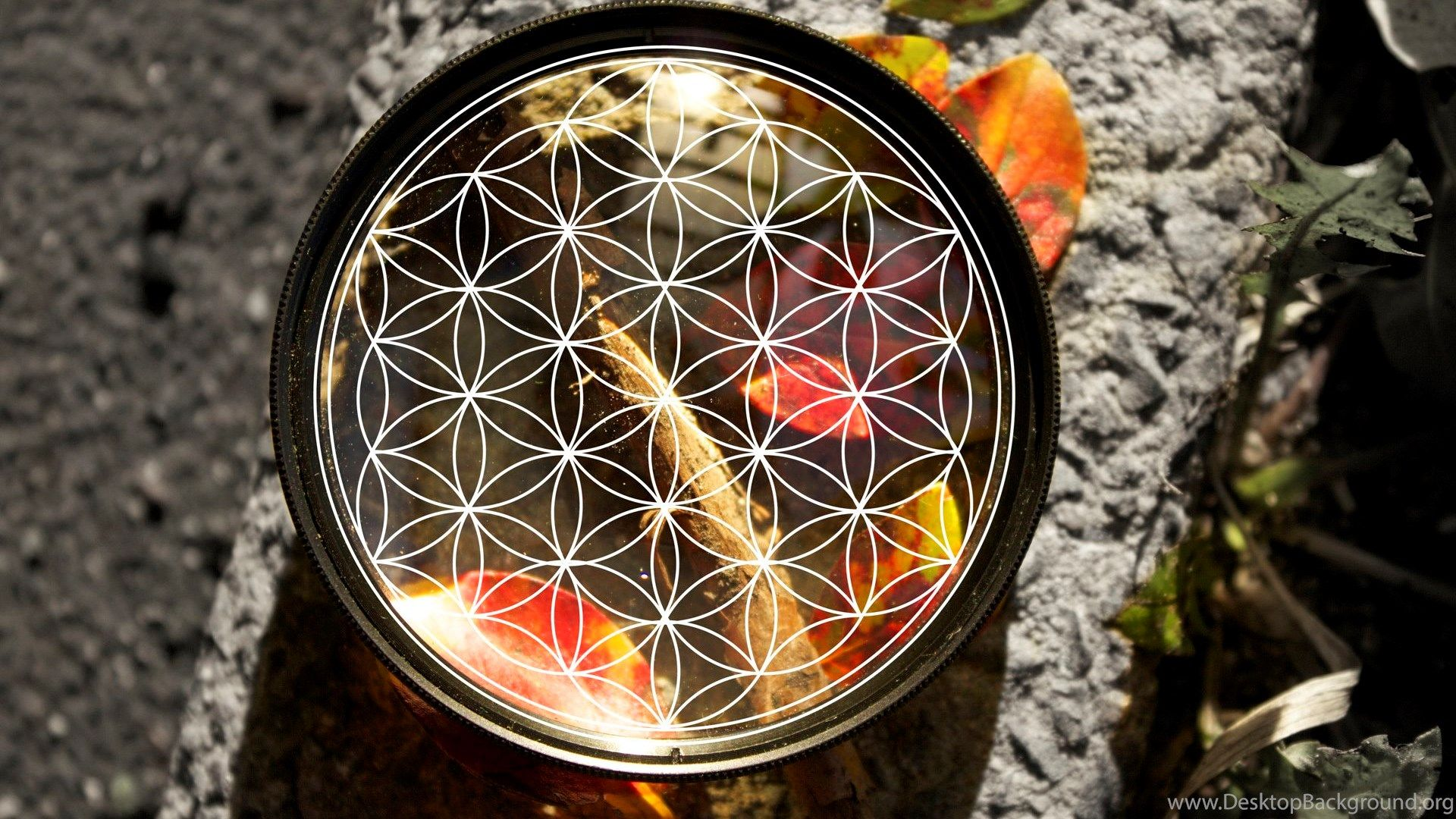 Flower Of Life Wallpapers Top Free Flower Of Life Backgrounds