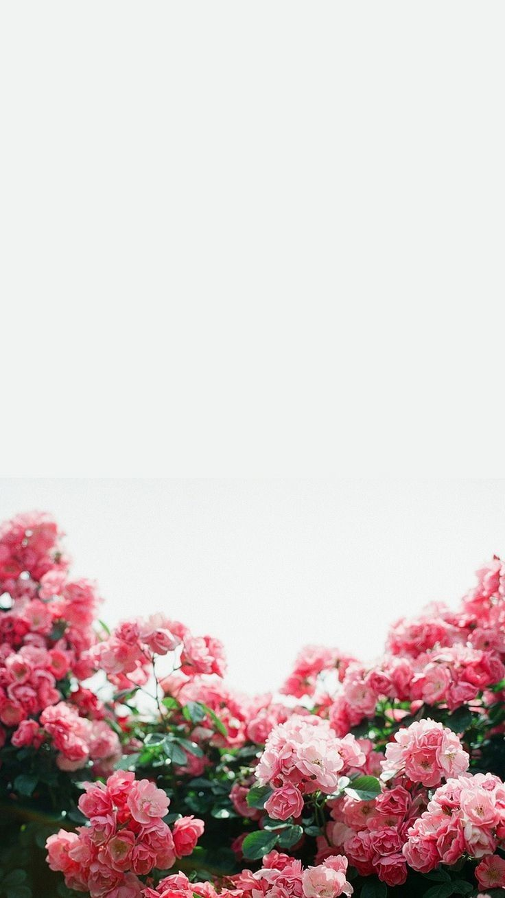 43 best free white floral iphone wallpapers wallpaperaccess 1080x1920 mightylinksfo