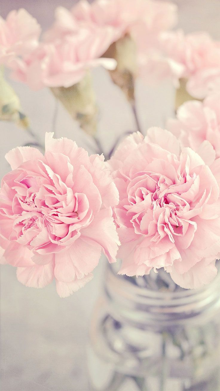 Light Pink Floral Iphone Wallpapers Top Free Light Pink Floral