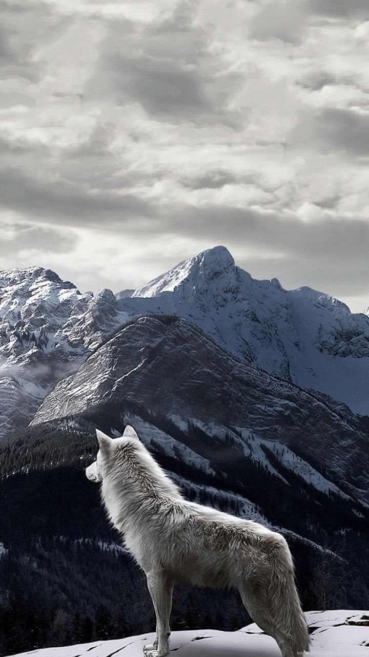 Wolf iphone wallpapers top free wolf iphone backgrounds - Phone animal wallpapers ...