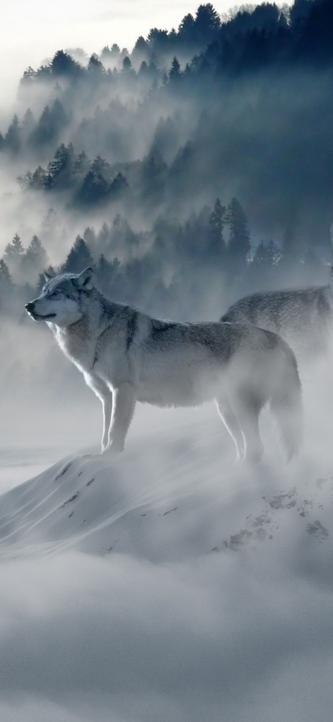 Wolf Iphone Wallpapers Top Free Wolf Iphone Backgrounds