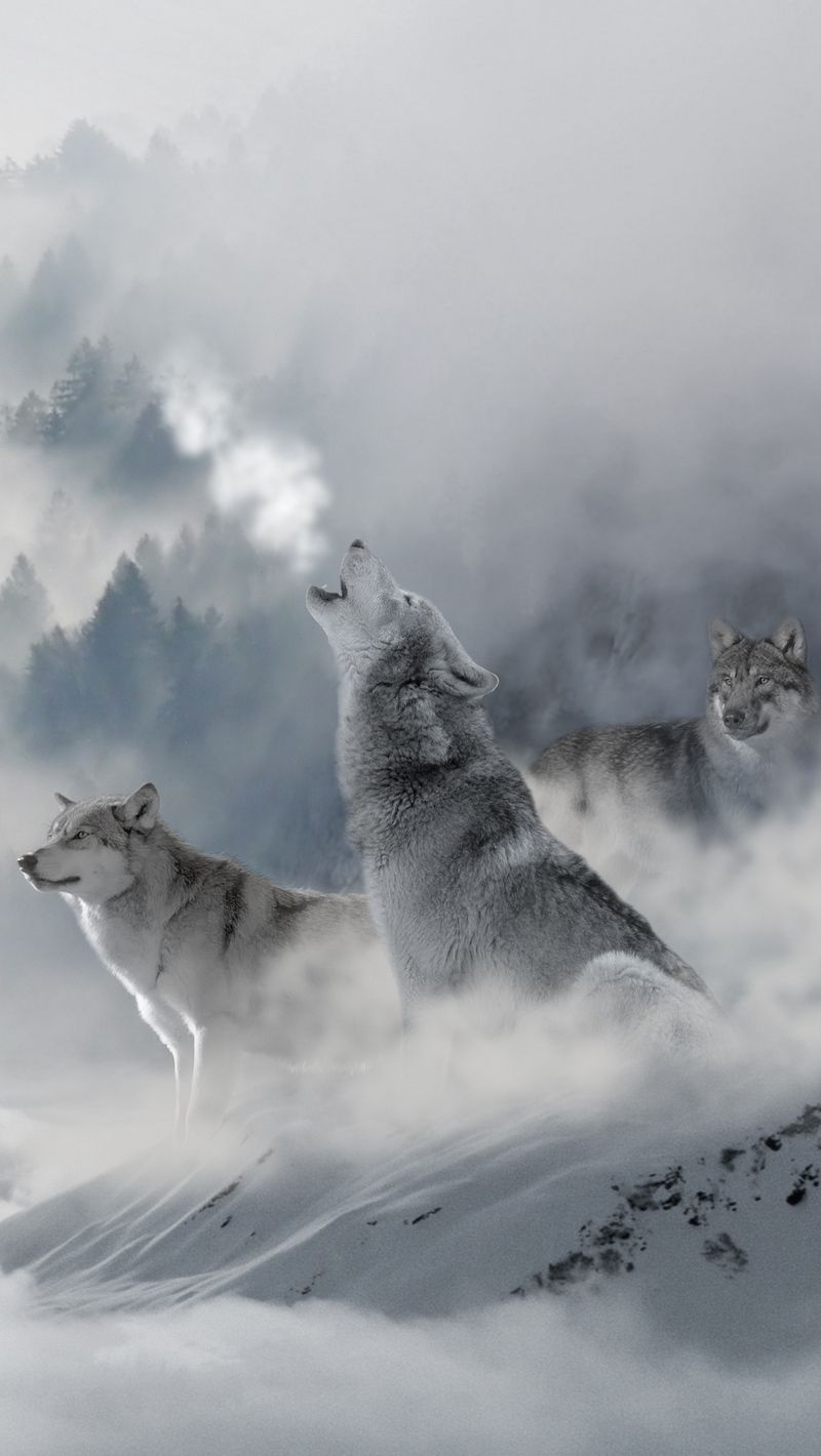 34 Best Free Wolf Iphone Wallpapers Wallpaperaccess
