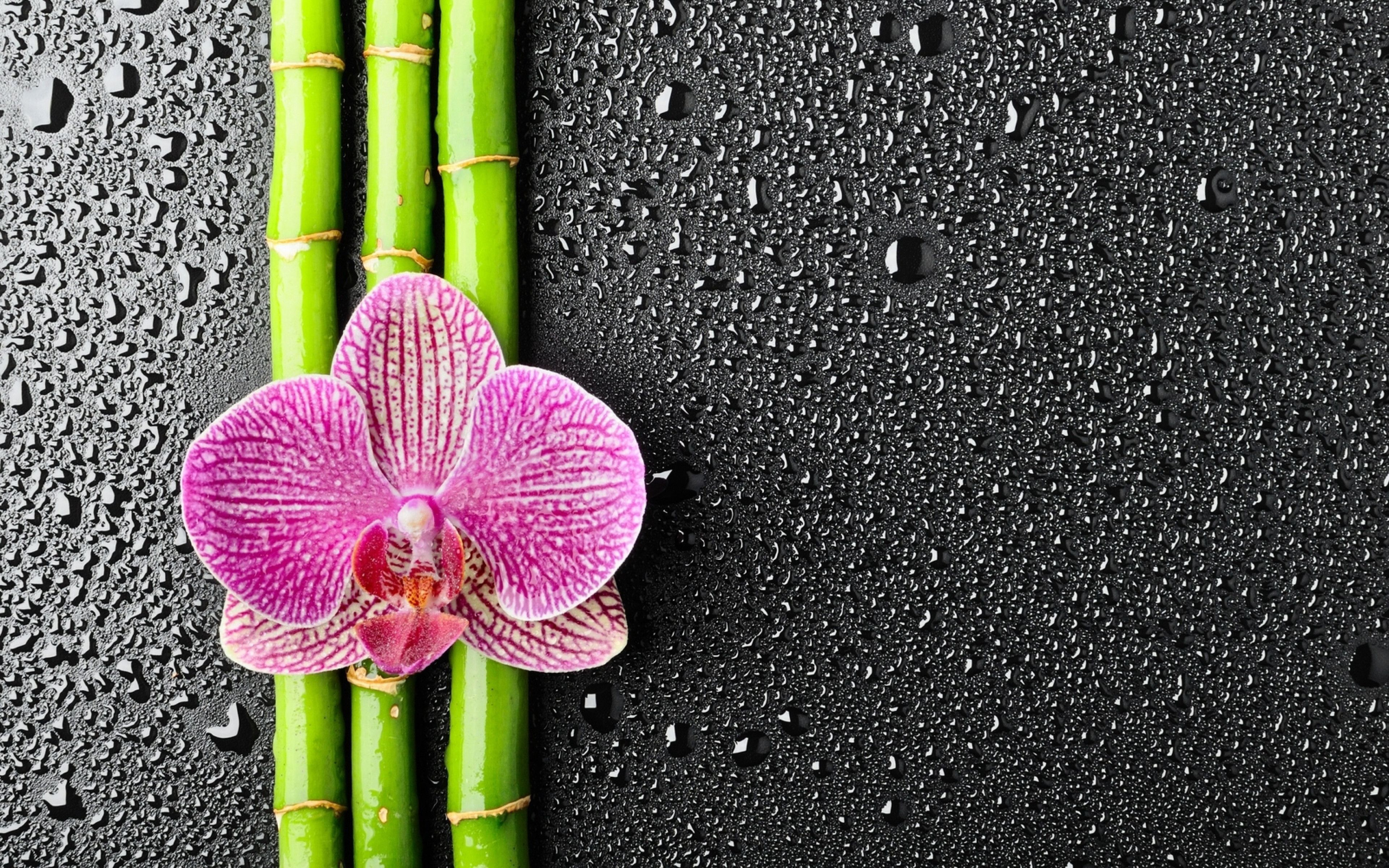 1920x1360 Candle Stones Orchid Bamboo Spa HD Wallpaper