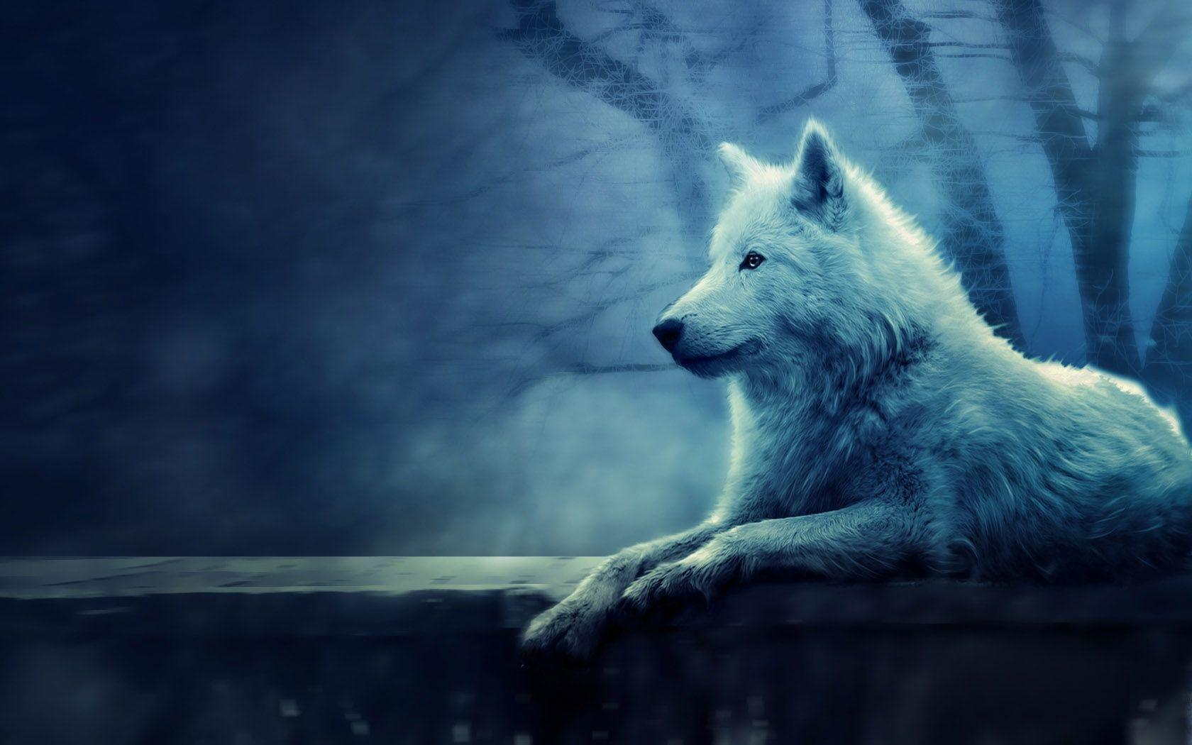 White Wolf Desktop Wallpapers Top Free White Wolf Desktop Backgrounds Wallpaperaccess