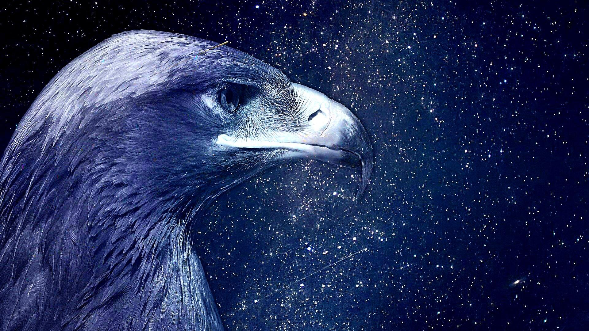 2560x1600 HD Eagle Wallpapers