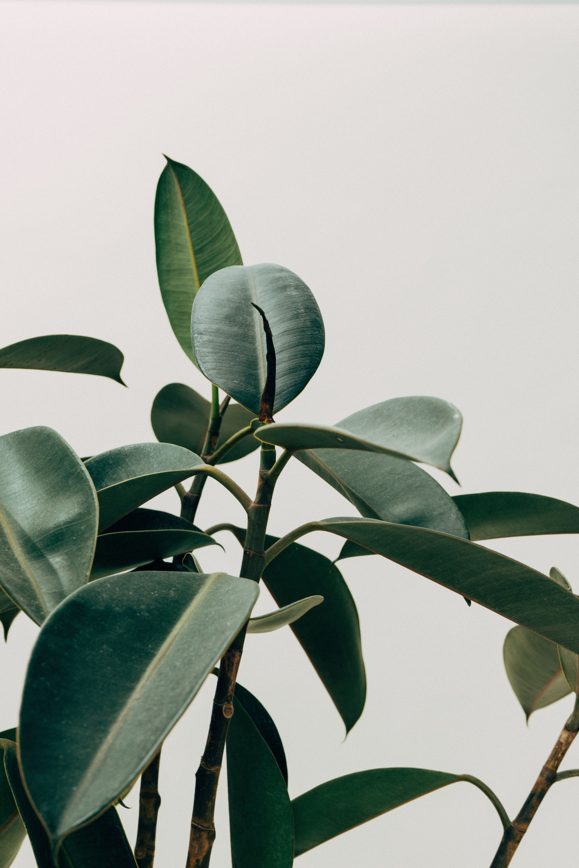 Aesthetic Minimalist Plant Wallpaper Novocom Top