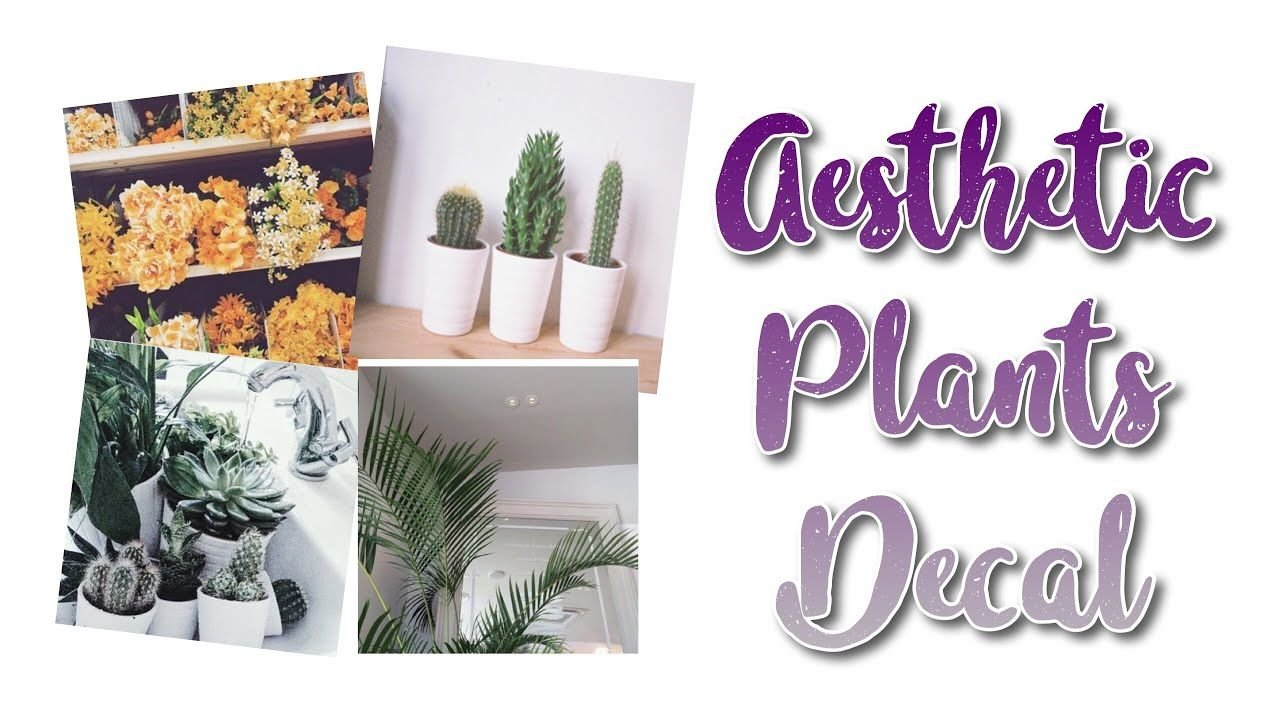 Cute Aesthetic Plant Wallpapers Top Free Cute Aesthetic