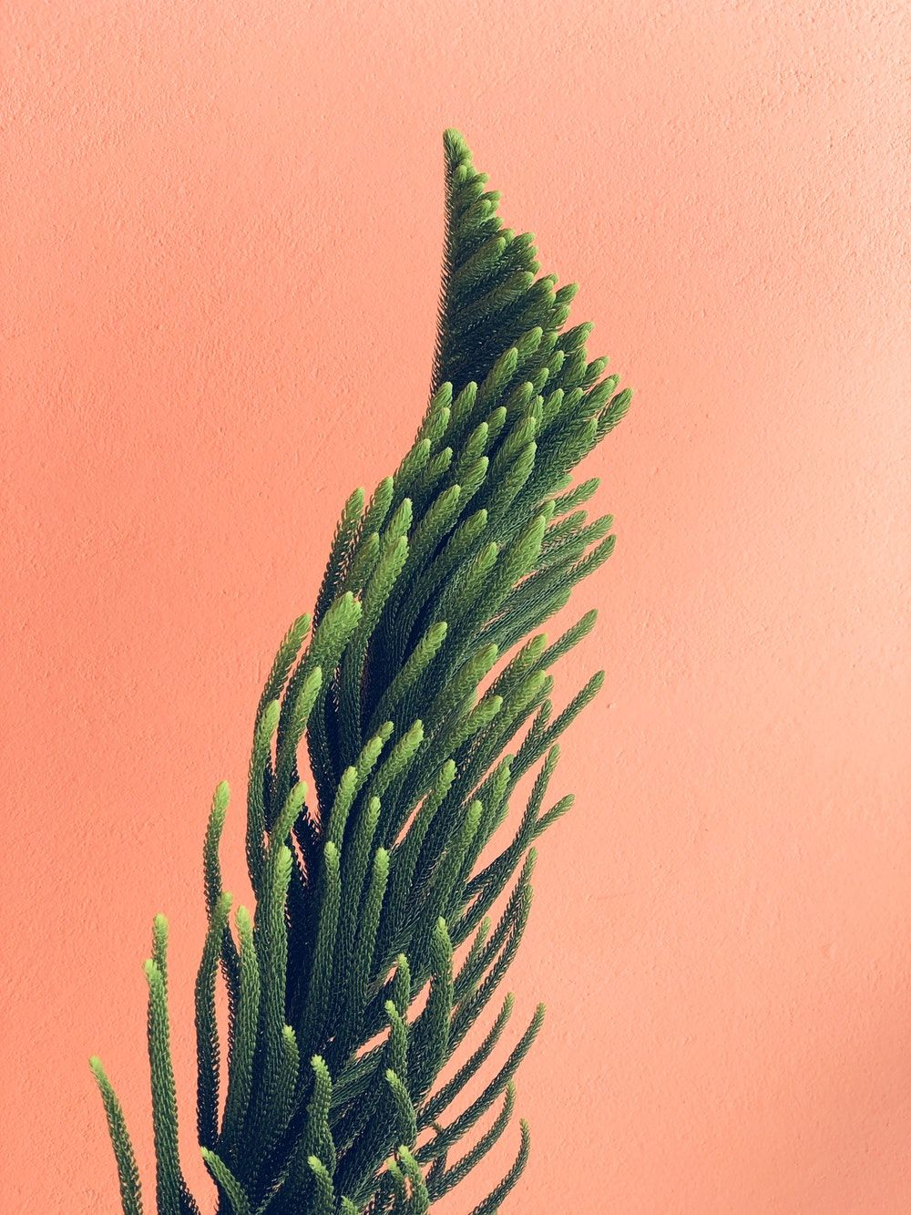 aesthetic plant wallpapers