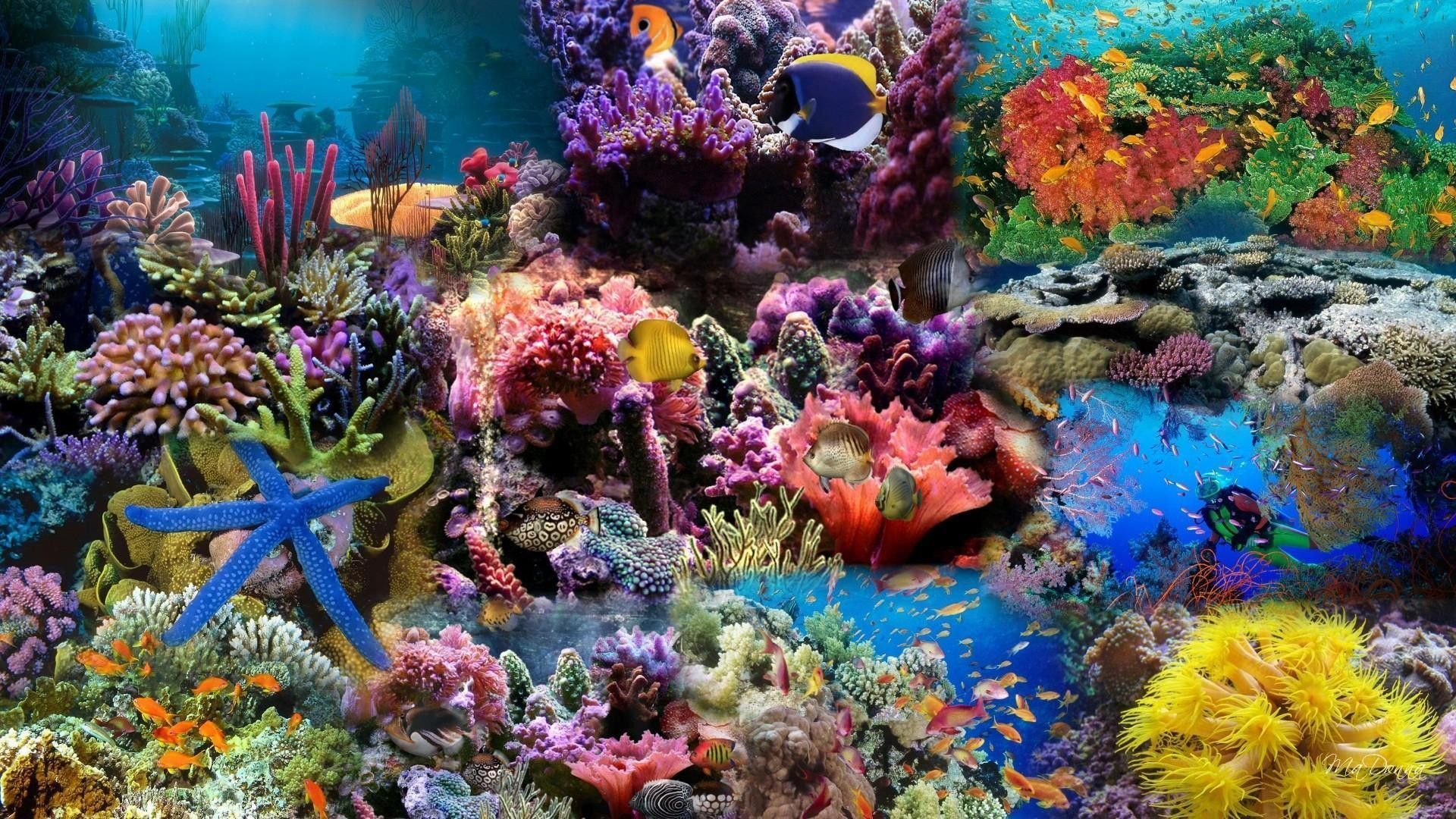 5fbcc9e0a0 Real Coral Reef 4K Wallpapers - Top Free Real Coral Reef 4K ...