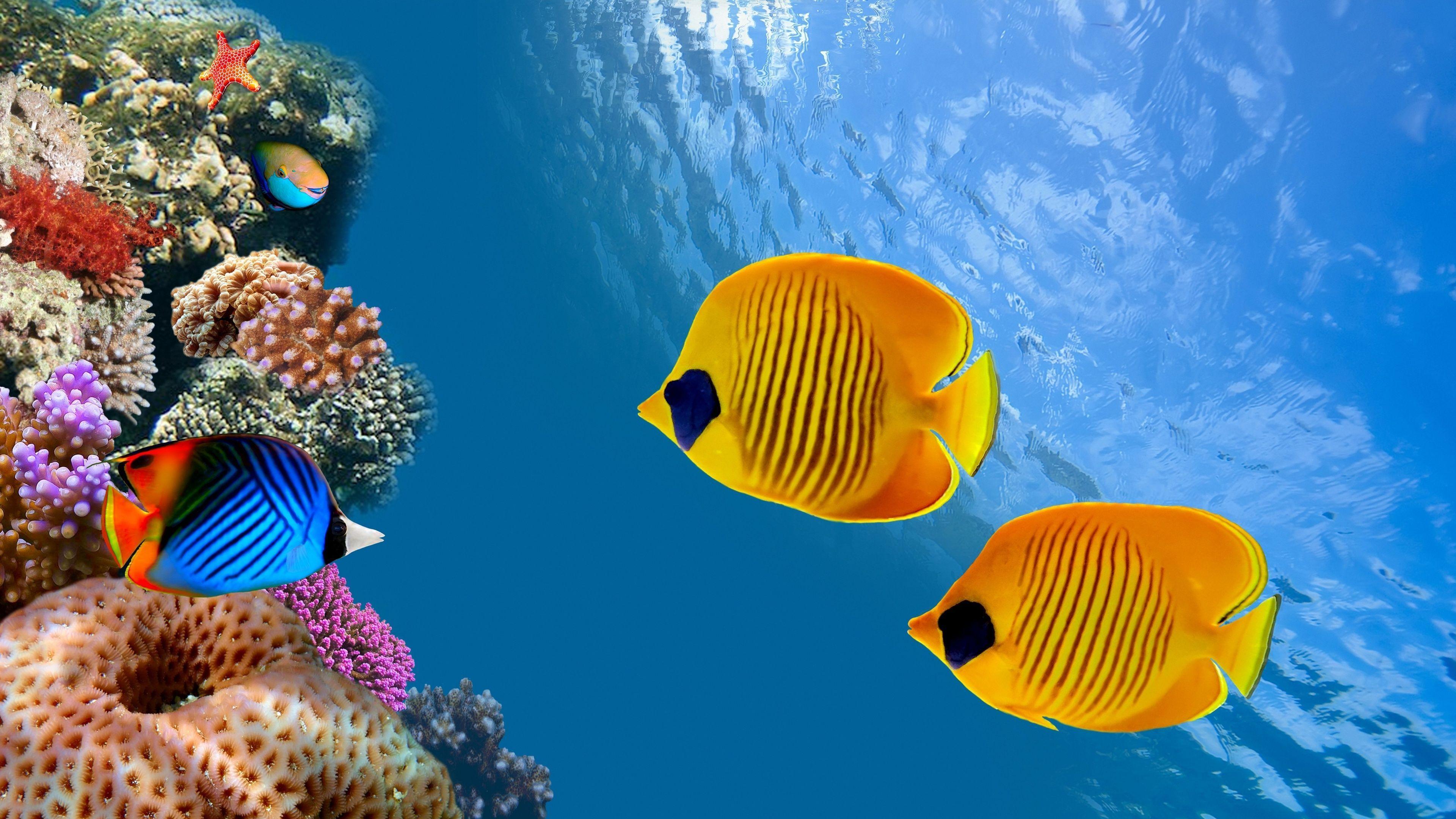 Aquarium 4k Uhd Wallpapers Top Free Aquarium 4k Uhd Backgrounds Wallpaperaccess