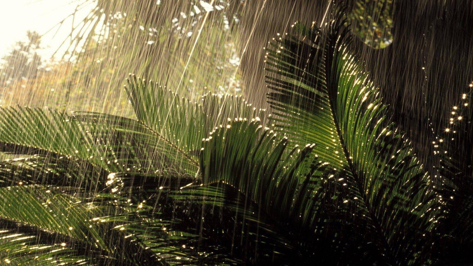 Desktop wallpaper nature rain
