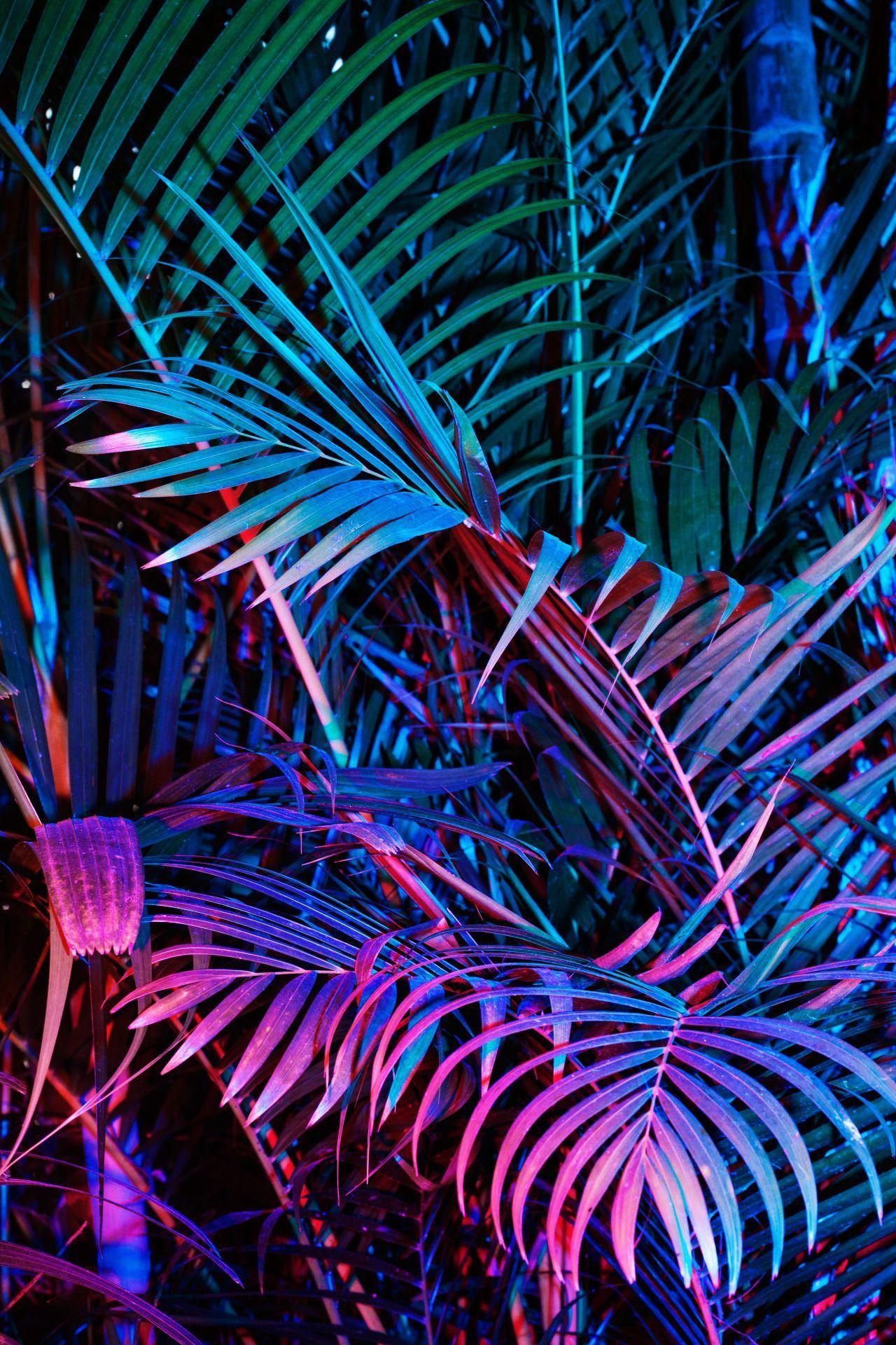 Wallpaper Estetika Neon Hitam - Neon Hitam Gratis Teratas ...