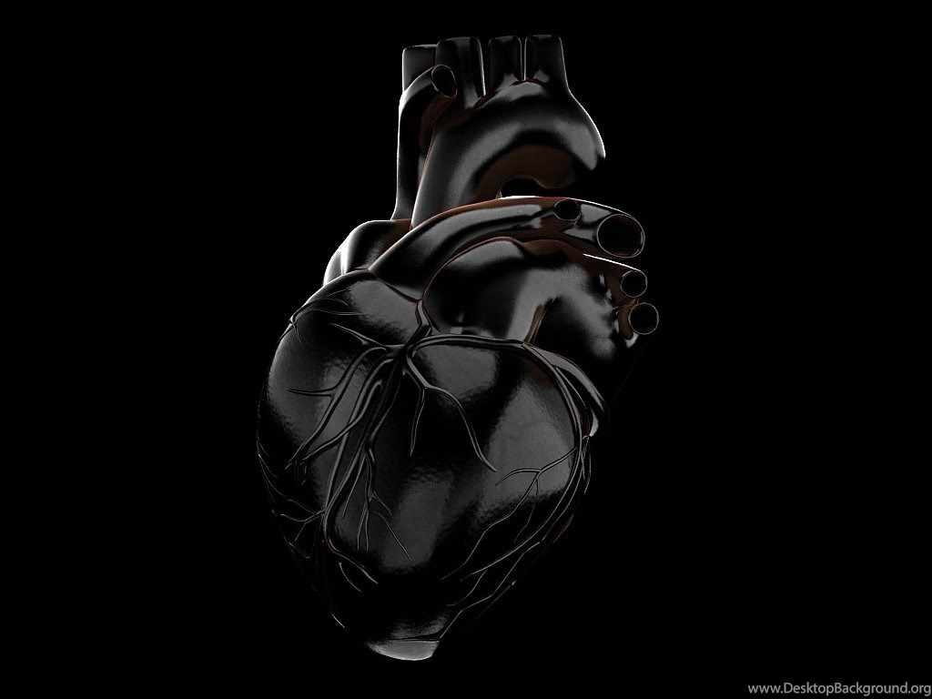 Anatomical Heart Wallpapers - Top Free ...