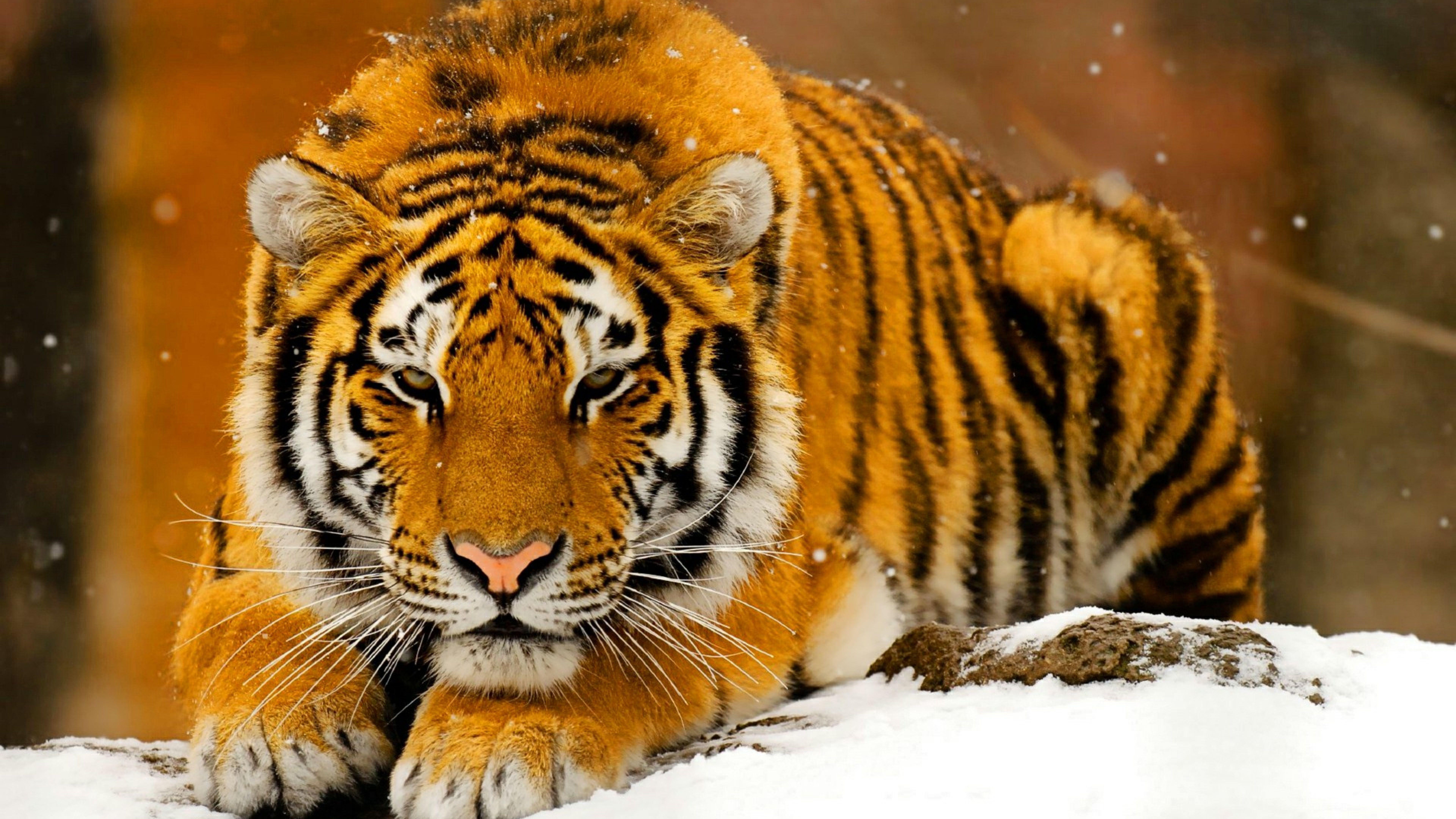 8k Ultra Hd Animal Wallpapers Top Free 8k Ultra Hd Animal