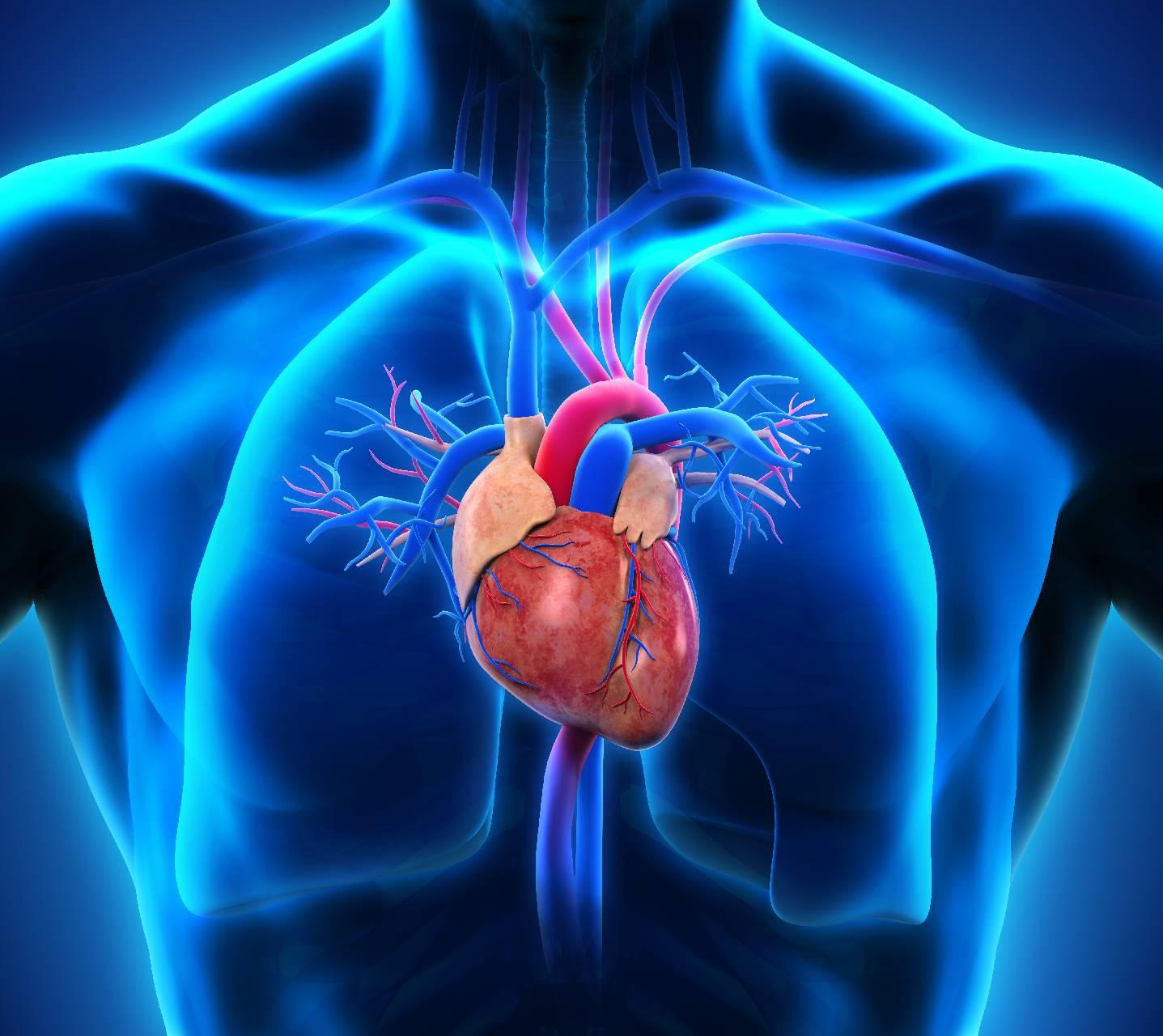 Human Heart Wallpapers - Top Free Human Heart Backgrounds ...