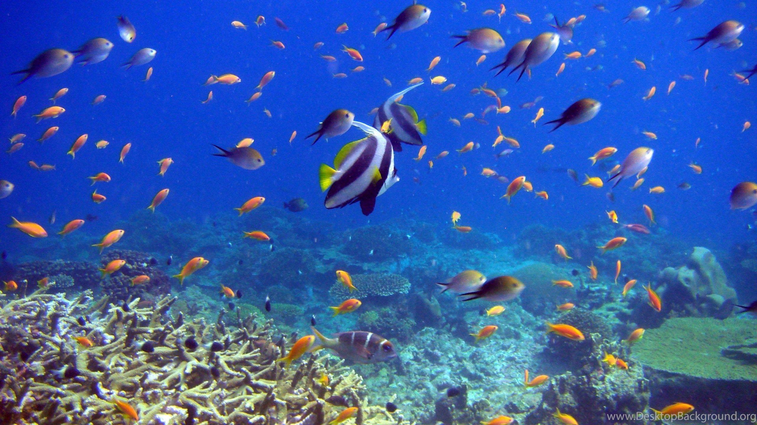 4k Ultra Hd Underwater Wallpapers Top Free 4k Ultra Hd Underwater