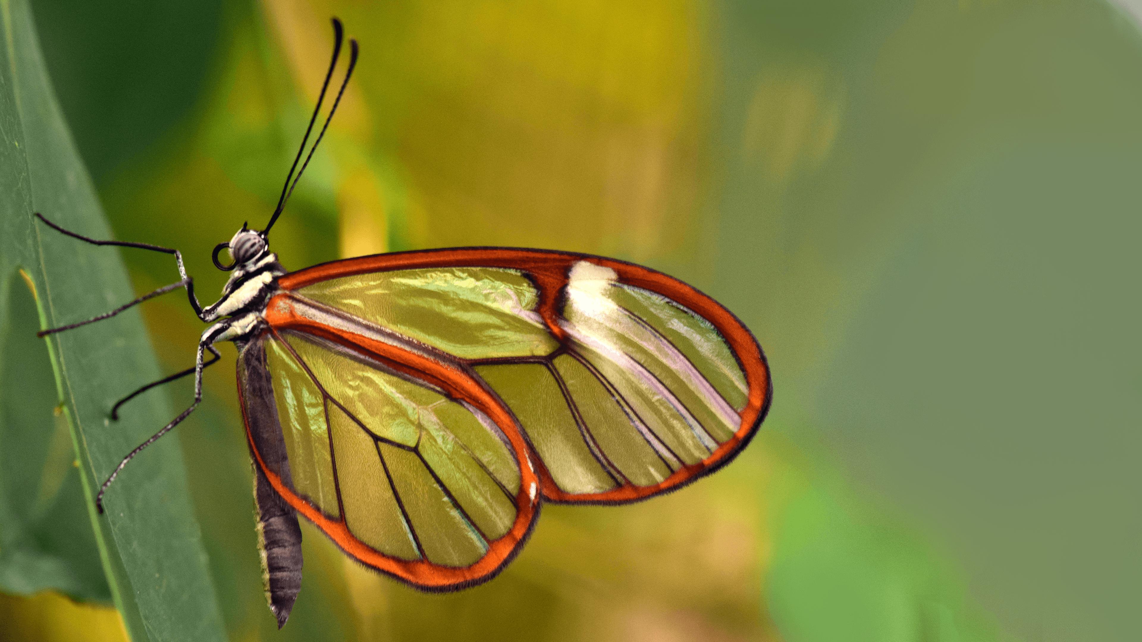 4k Butterfly Wallpapers Top Free 4k Butterfly Backgrounds