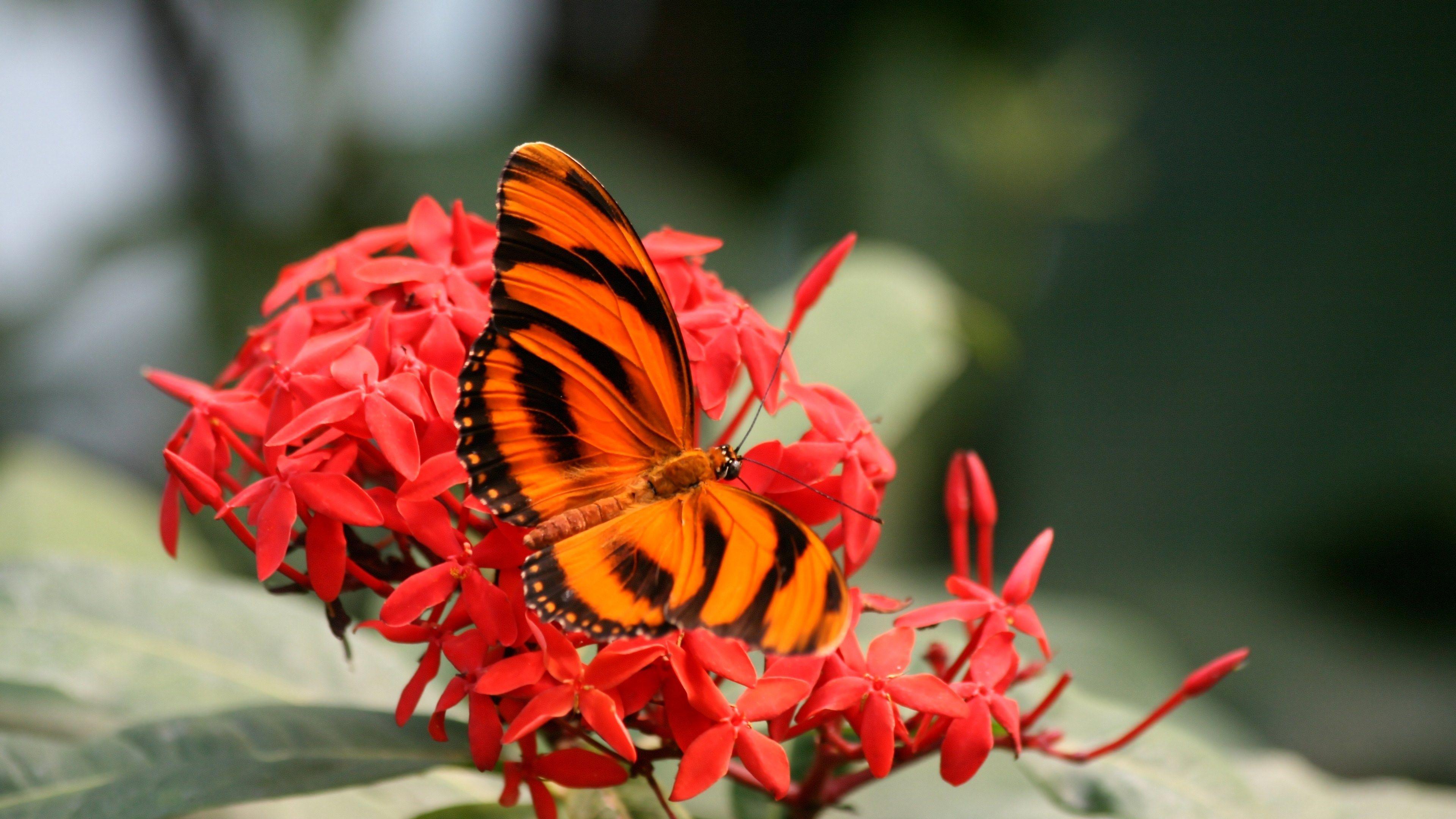 4K Butterfly Wallpapers - Top Free 4K Butterfly ...