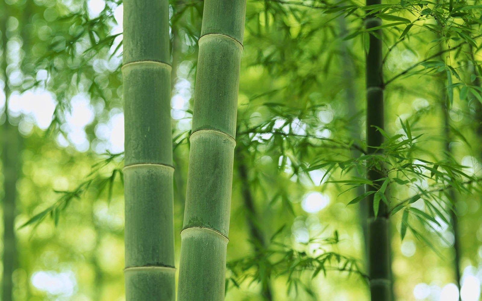 подобрать его картинки бамбук для телефона вот пространства для