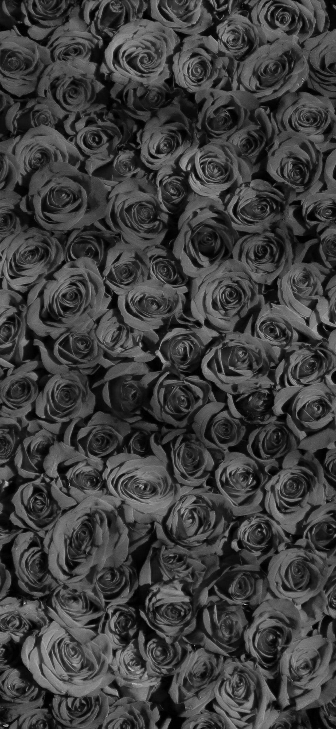 Dark Floral Iphone Wallpapers Top Free Dark Floral Iphone Backgrounds Wallpaperaccess