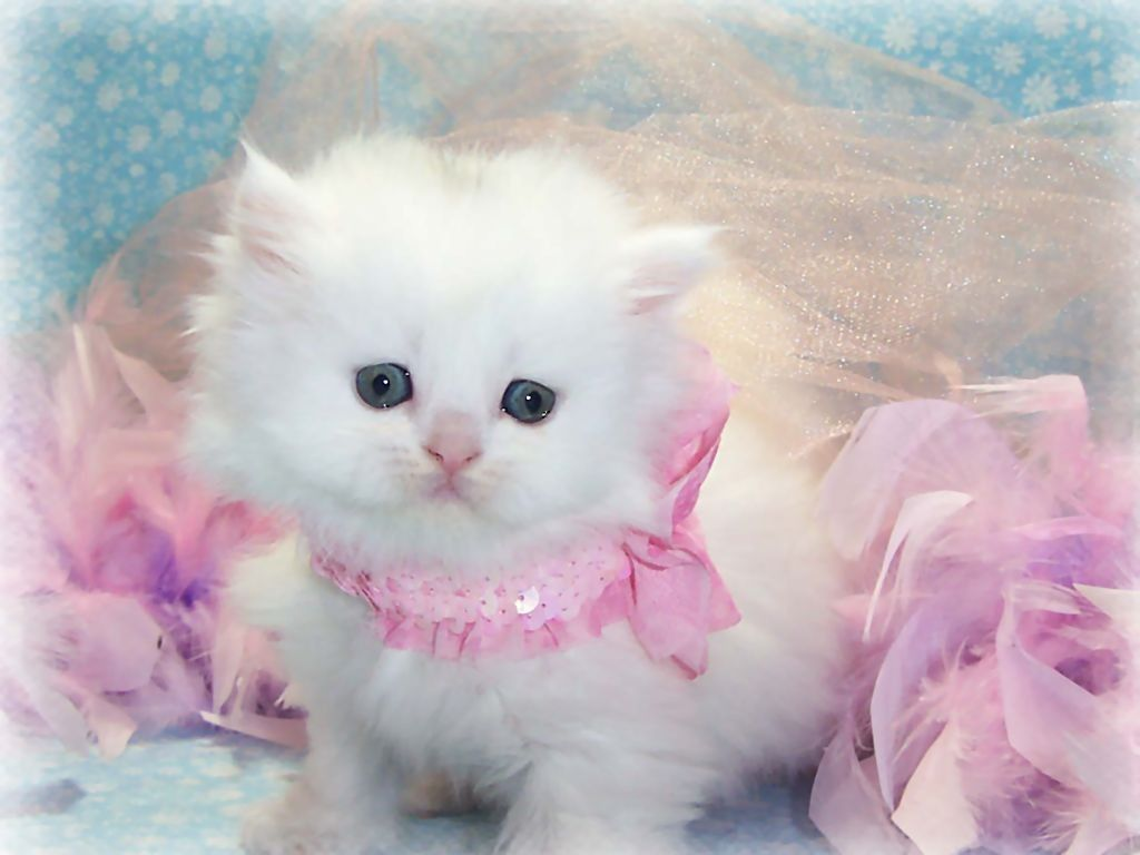 Free Download Pink Wallpaper Cute Cat Images Cute And