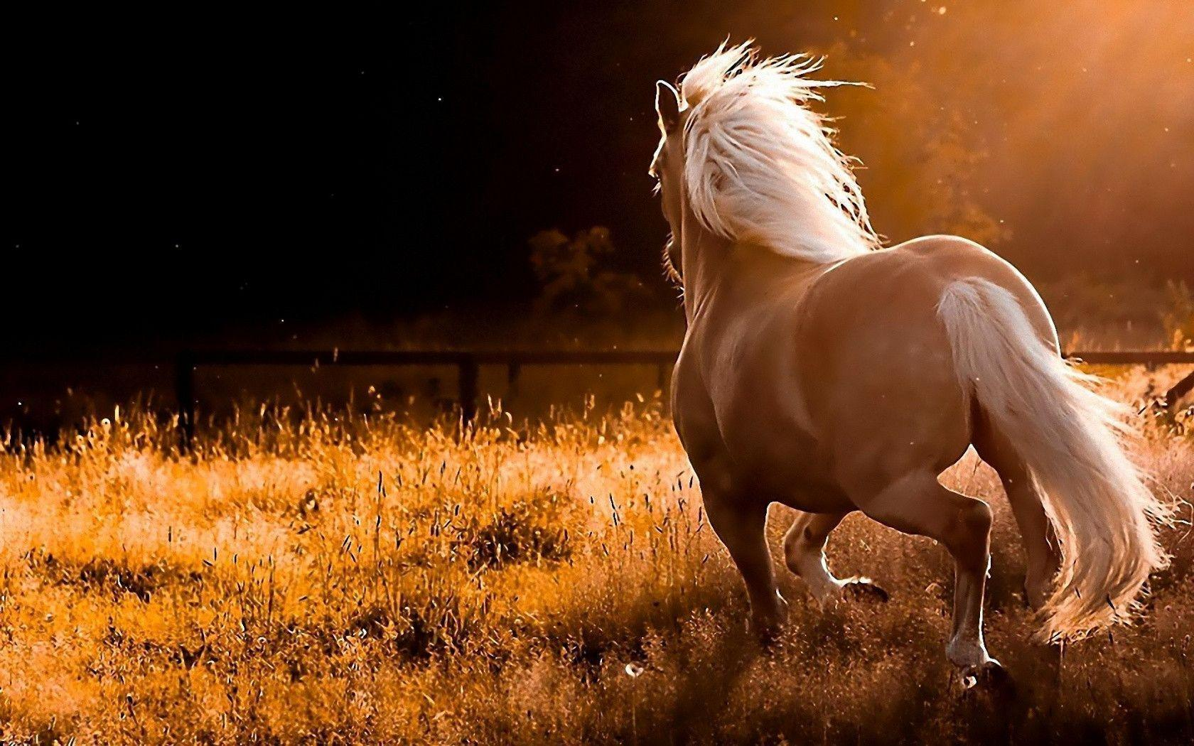 1680x1050 Wild Horses Wallpapers