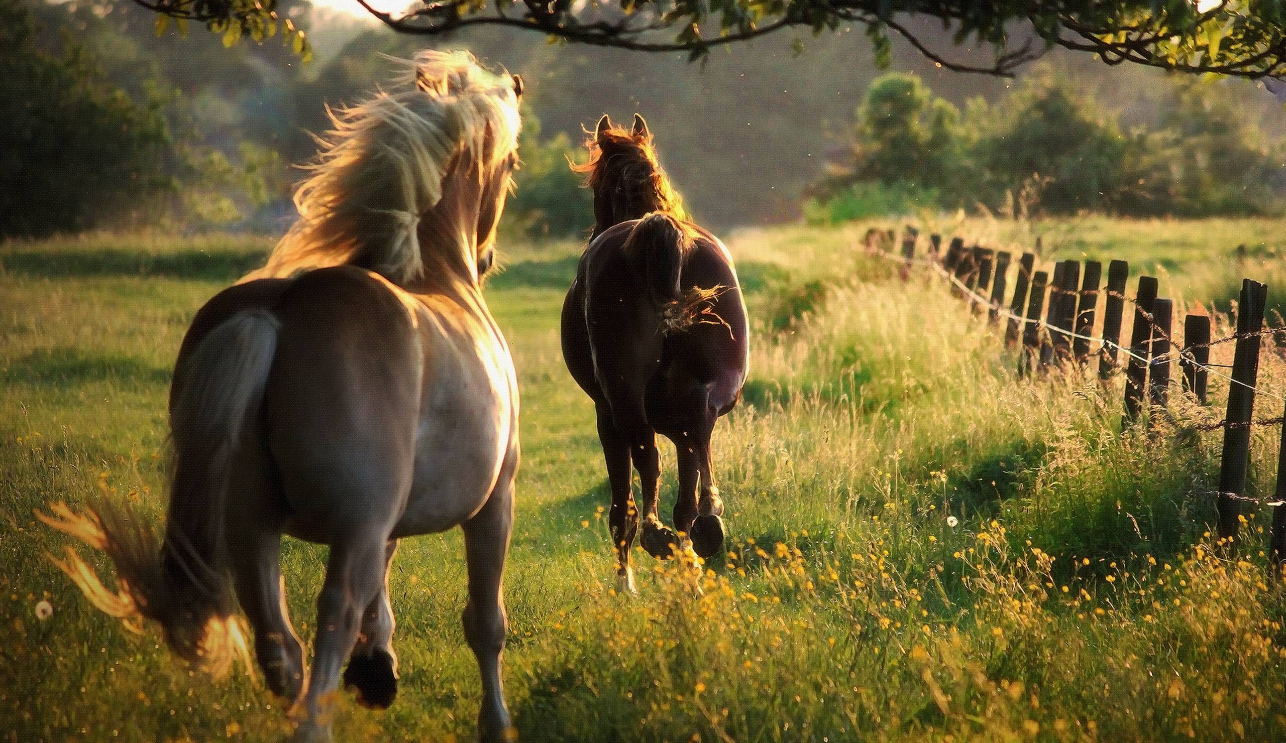 Wild Horses Wallpapers - Top Free Wild