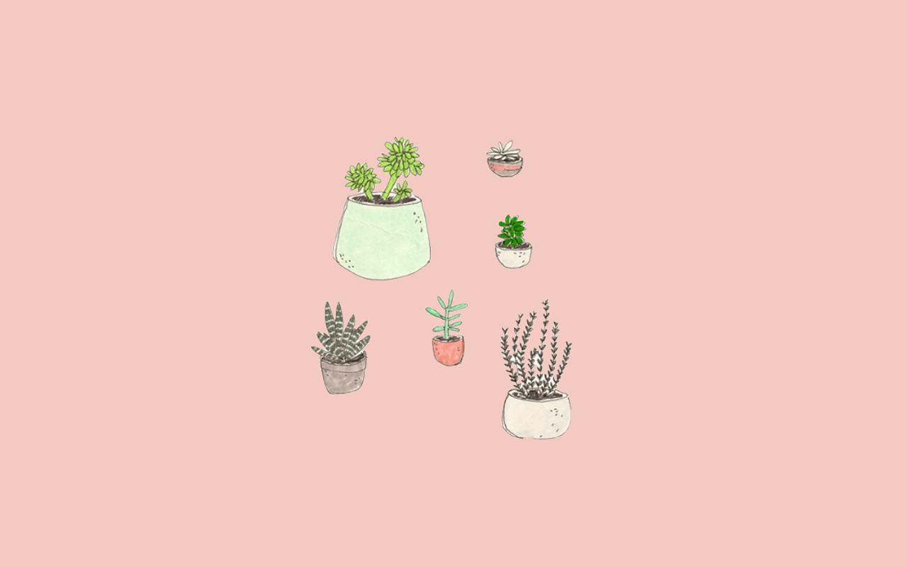 Aesthetic Succulents Wallpapers Top Free Aesthetic