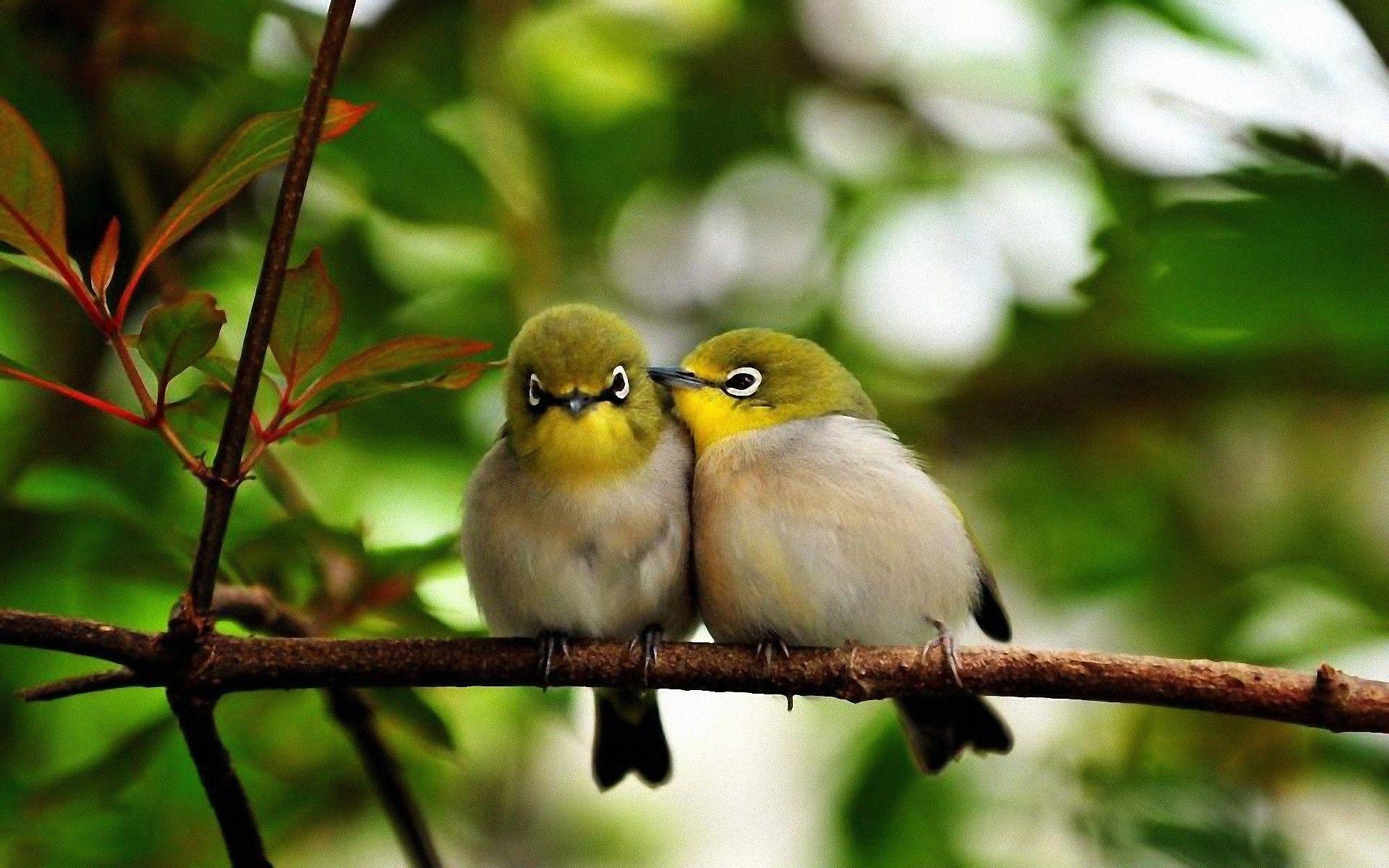 Cute Bird Wallpapers Top Free Cute Bird Backgrounds
