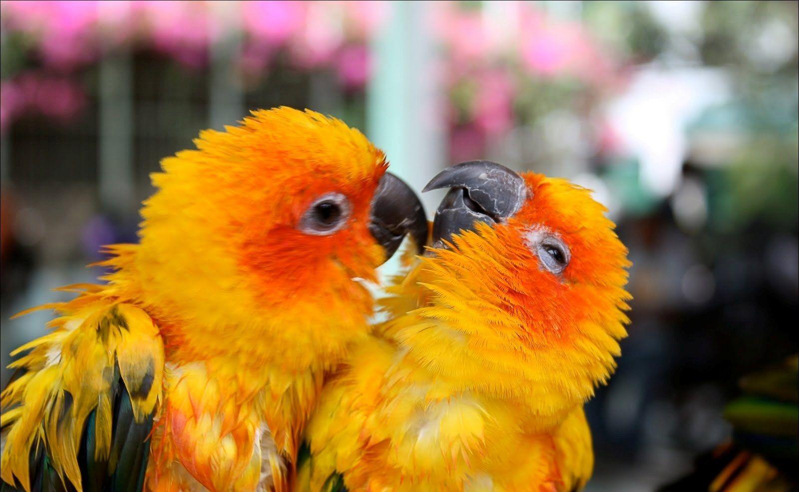 Cute Bird Wallpapers Top Free Cute Bird Backgrounds Wallpaperaccess