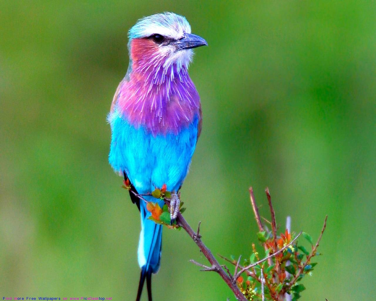 Cute Bird Wallpapers Top Free Cute Bird Backgrounds Wallpaperaccess