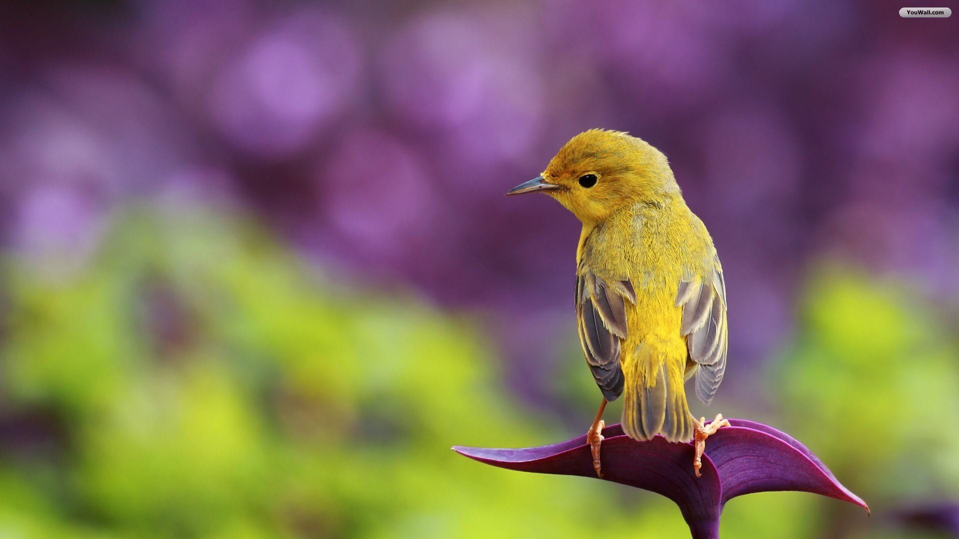 Bird Desktop Wallpapers Top Free Bird Desktop Backgrounds