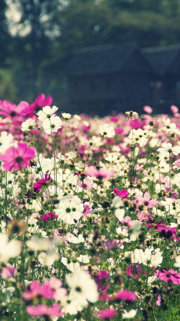 Spring Flower Iphone Wallpapers Top Free Spring Flower