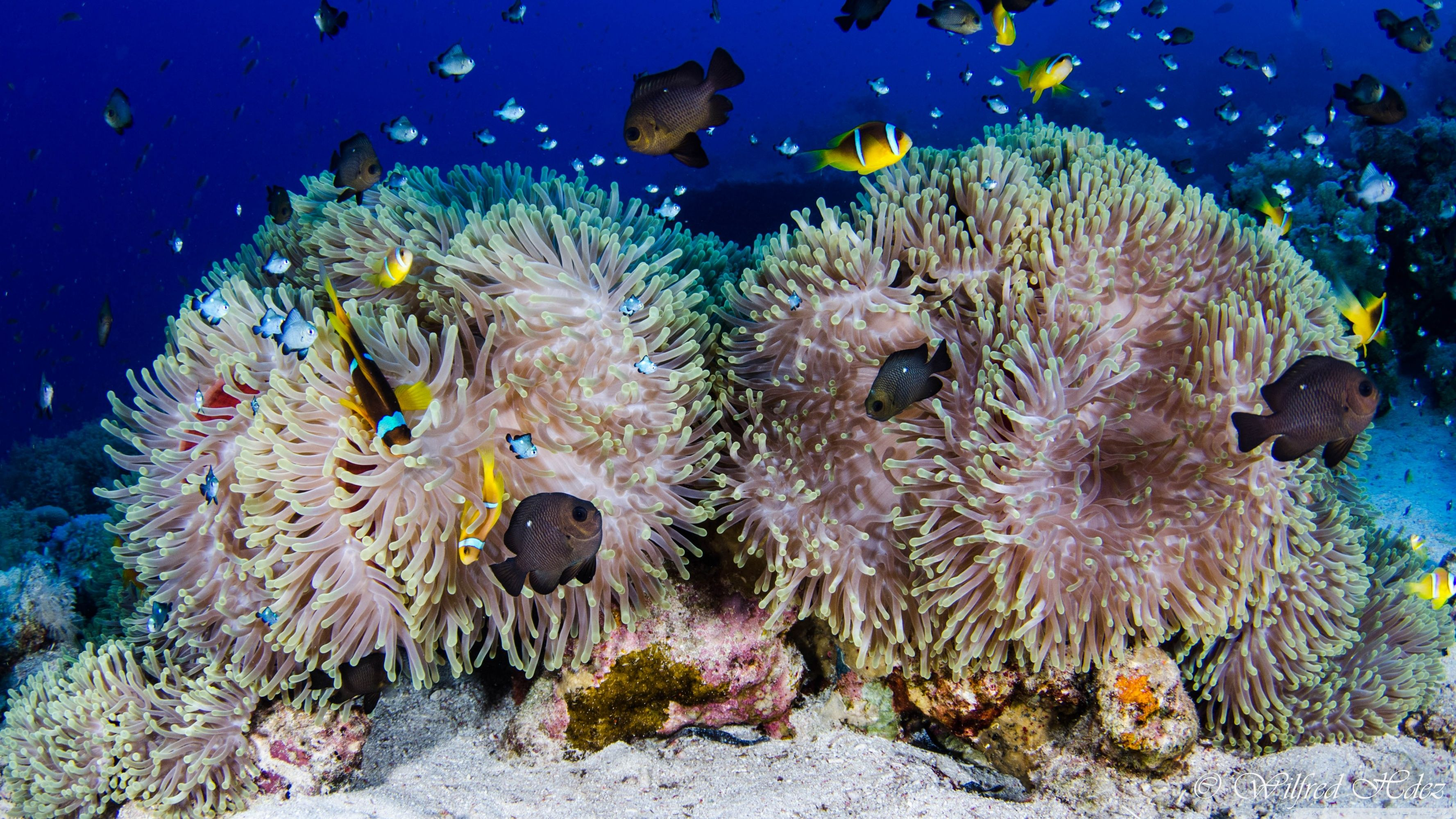 Coral Reef 4K Dual Monitor Wallpapers - Top Free Coral ...