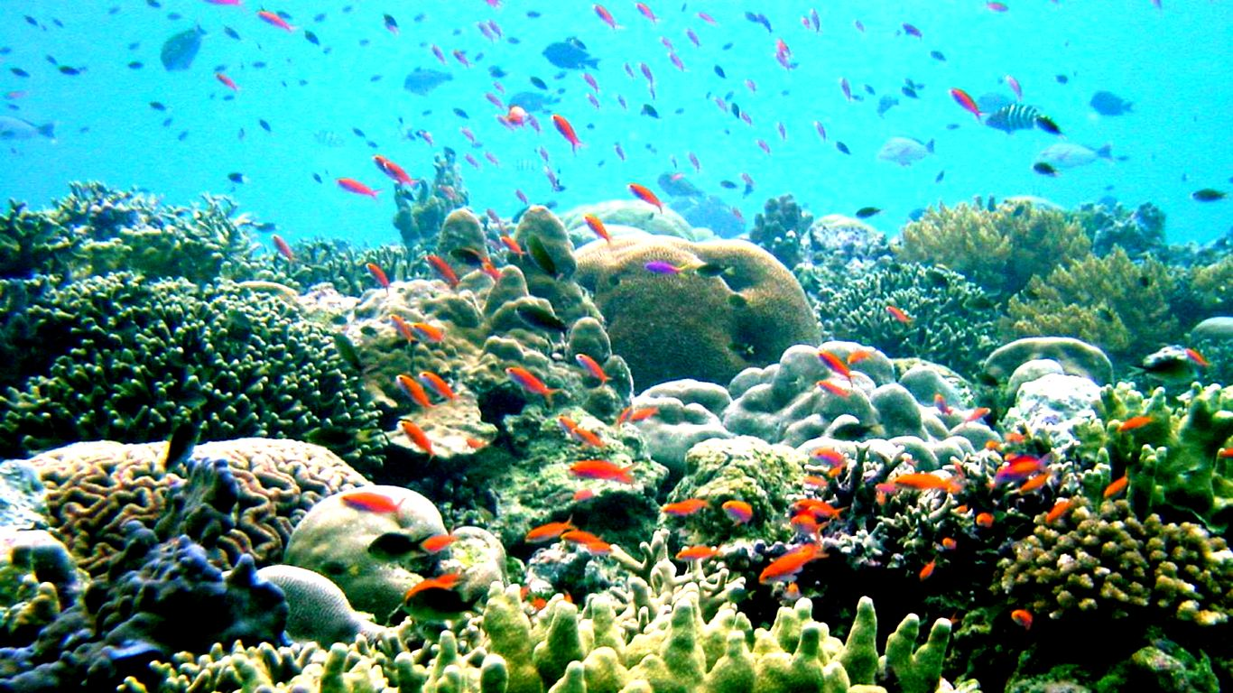 42 Best Free Coral Reef 4k Dual Monitor Wallpapers Wallpaperaccess